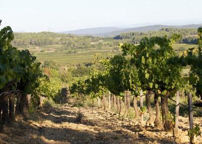 Vignes et Cévennes