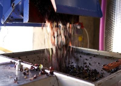 Après le jus, le raisin
