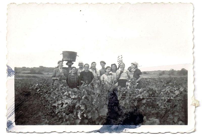 Groupe de vendengeurs dans une vigne du domaine Fortuné en 1939