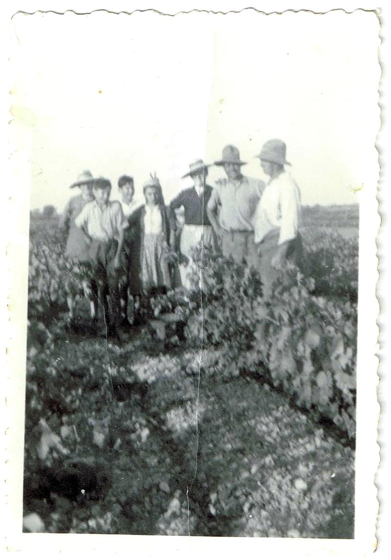 Groupe de vendangeurs dans une vigne en 1939